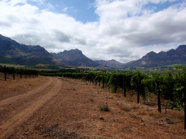 Blaauwklippen Vineyard road