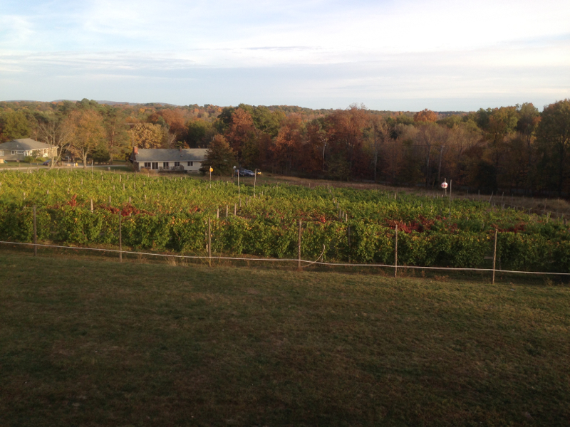 Robibero vineyard with fall foliage